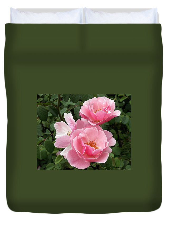 Pink Roses Duvet Cover featuring the photograph Pink Roses 2 by Amy Fose