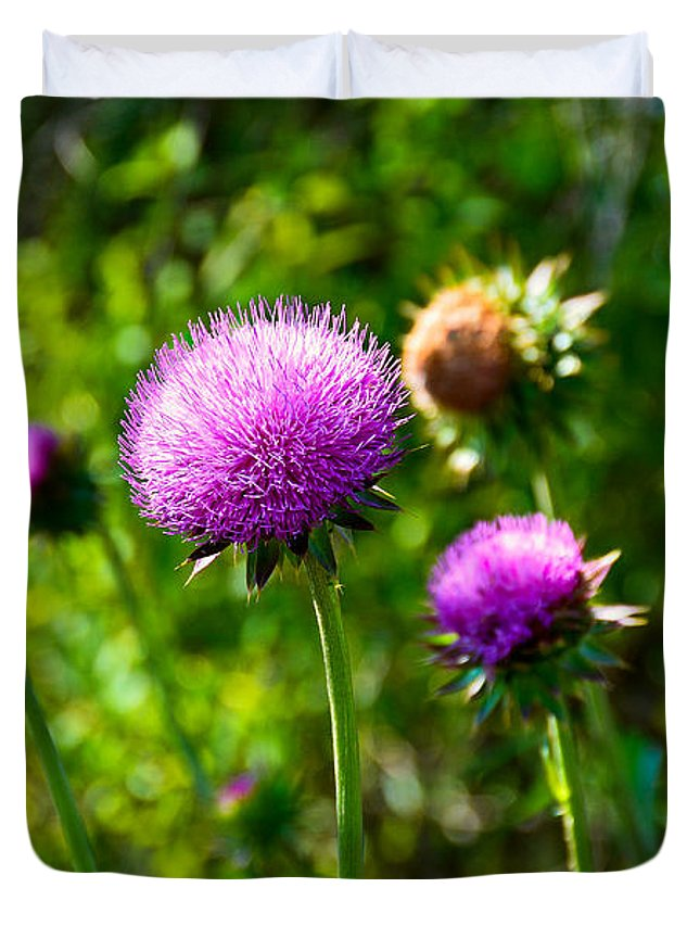 Pink Duvet Cover featuring the photograph Pink Thistle Study 1 by Robert Meyers-Lussier