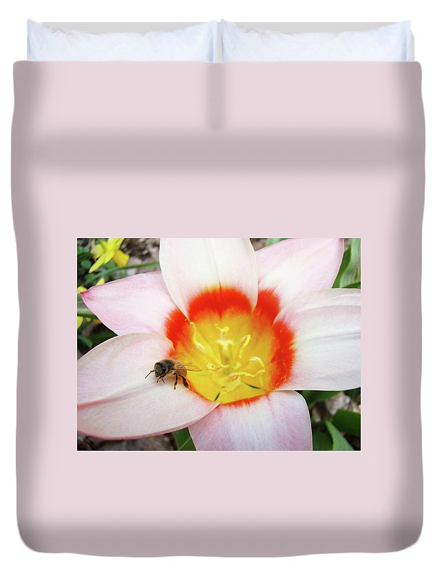 Tulip Duvet Cover featuring the photograph Pink Tulip Flower Orange Art Prints Honey Bee Baslee Troutman by Baslee Troutman