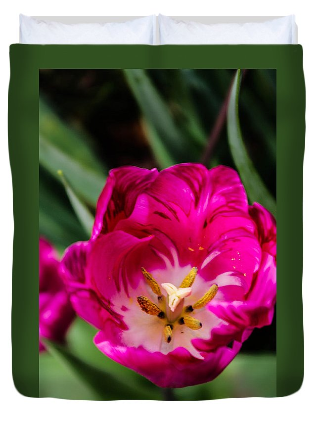 Flower Duvet Cover featuring the photograph Pink Tulip by Gerald Kloss