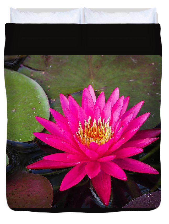 Water Lily Duvet Cover featuring the photograph Pink Waterlily Garden by Paula Ponath
