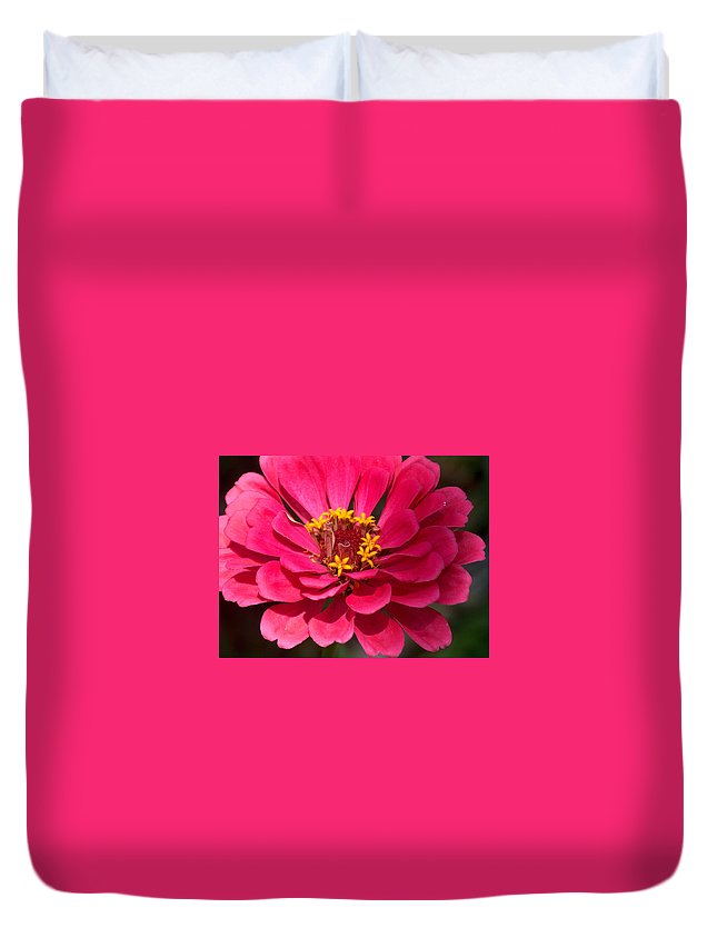 Zinnia Duvet Cover featuring the photograph Pink Zinnia by Racquel Morgan