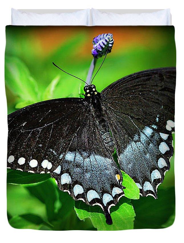 Pipevine Swallowtail Butterfly Duvet Cover featuring the photograph Pipevine Swallowtail Butterfly by Saija Lehtonen