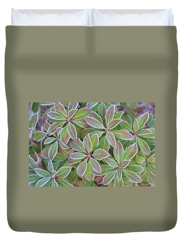 Plant Duvet Cover featuring the photograph Plant Pattern by Douglas Barnett