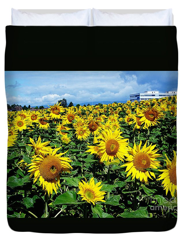 Sunflowers Duvet Cover featuring the photograph Pleasant Warmth by Jeff Barrett