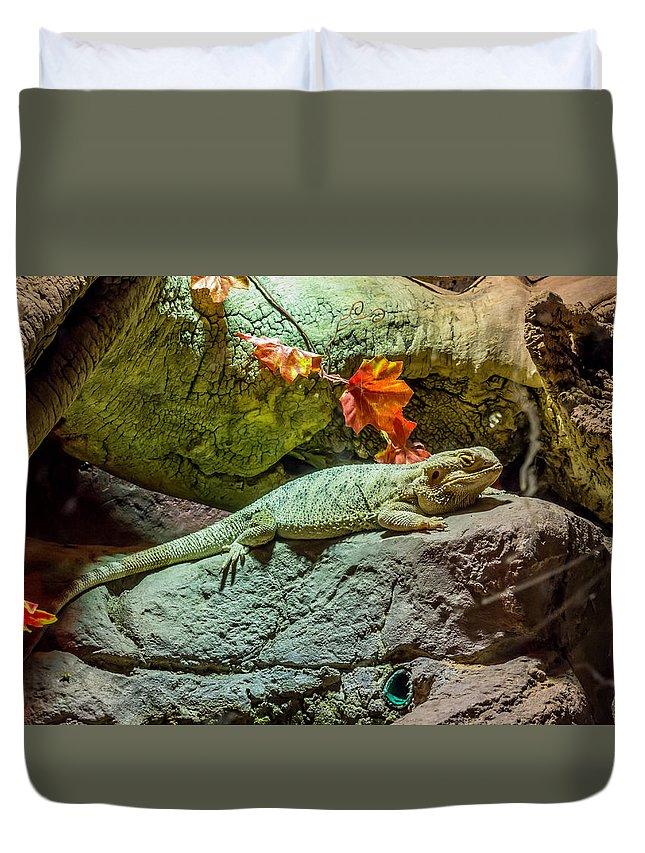 Pogona Duvet Cover featuring the photograph Pogona by Fabio Gomes Freitas