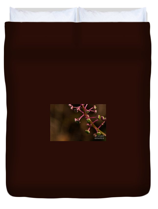 Pokeweed Duvet Cover featuring the photograph Pokeweed Emerges by Linda Shafer