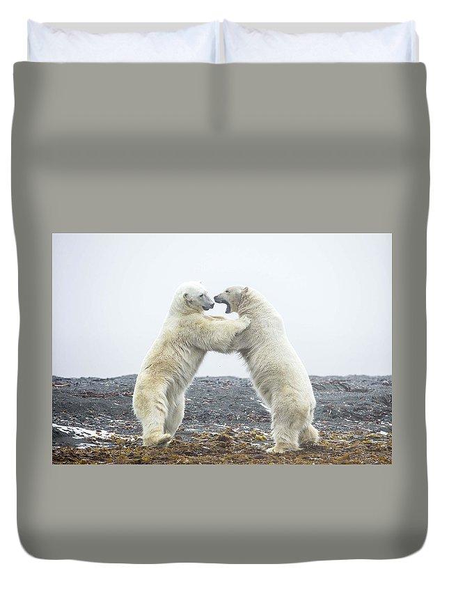 Polar Bear Duvet Cover featuring the digital art Polar Bear by Dorothy Binder