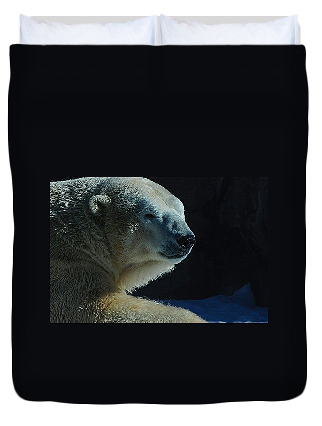 Polar Bear White Snow Alaska Zoo Duvet Cover featuring the photograph Polar Bear by Galeria Trompiz