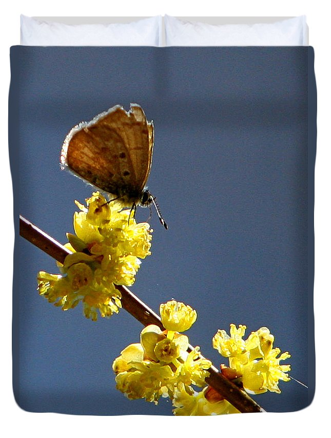 Nature Duvet Cover featuring the photograph Pollen Pickup by Marle Nopardi