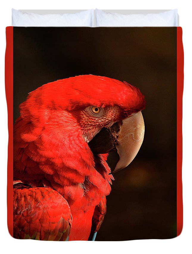 Pondering Duvet Cover featuring the photograph Pondering Parrot by Pamela Kerti
