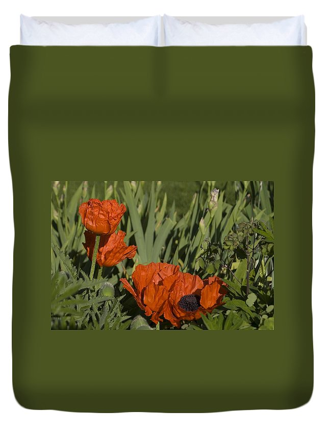 Poppy Duvet Cover featuring the photograph Poppies 1 by Sara Stevenson