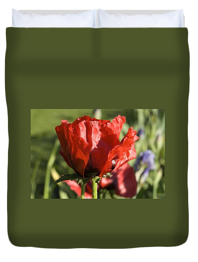 Poppies Duvet Cover featuring the photograph Poppies 5 by Sara Stevenson