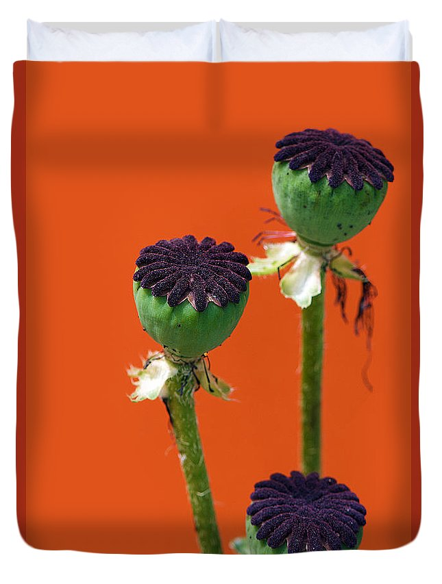 Interior Design Duvet Cover featuring the photograph Poppies On Orange by Lisa Knechtel