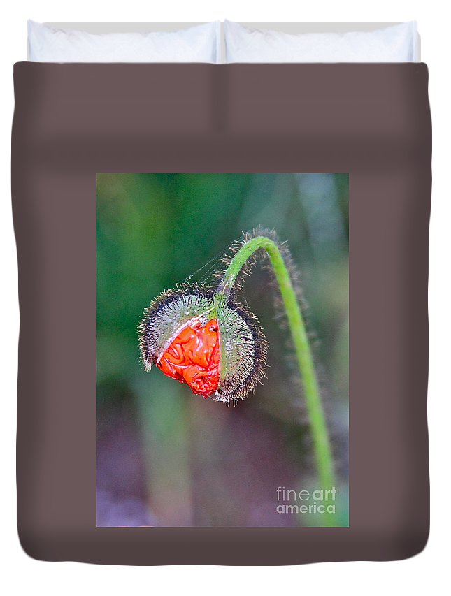 Plant Duvet Cover featuring the photograph Popping Poppy by Rick Monyahan