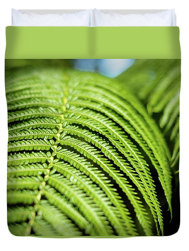 Fern Duvet Cover featuring the photograph Portrait Of A Fern by T Brian Jones