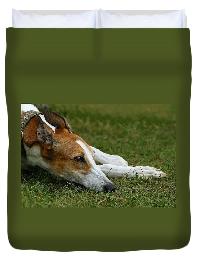 Editorial Duvet Cover featuring the photograph Portrait Of A Greyhound - Soulful by Angela Rath