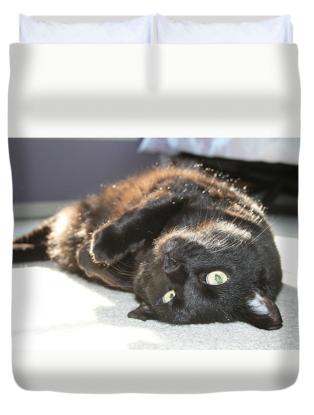 Black Cat Duvet Cover featuring the photograph Posing Black At by Brad Nellis