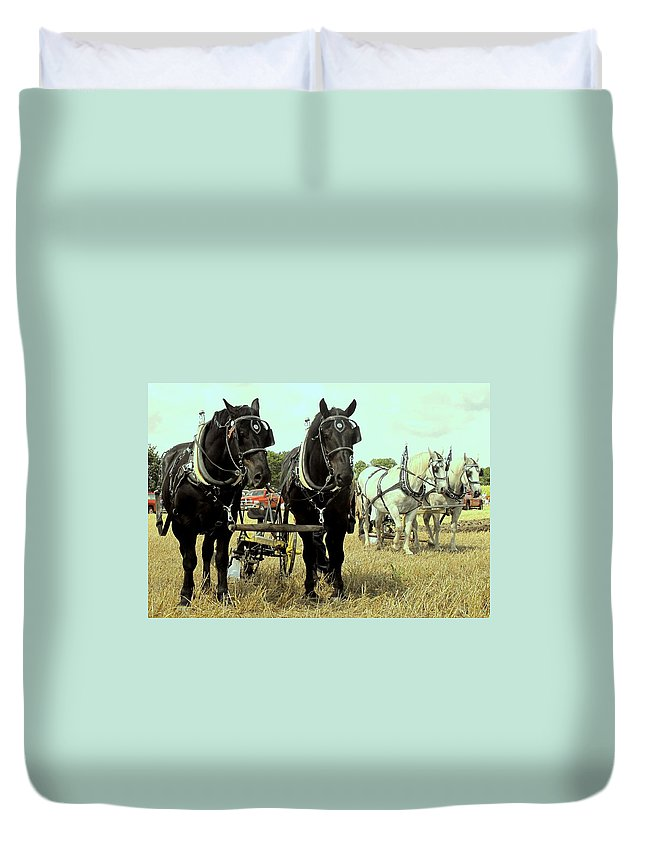 Horse Duvet Cover featuring the photograph Posing by Ian MacDonald
