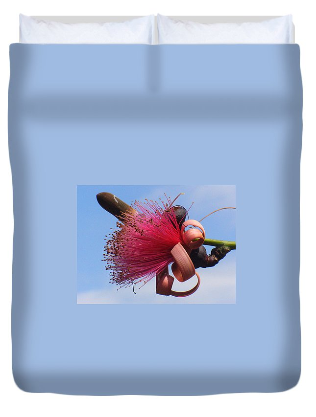 Plants Duvet Cover featuring the photograph Powder Puff Blossom by Peggy King