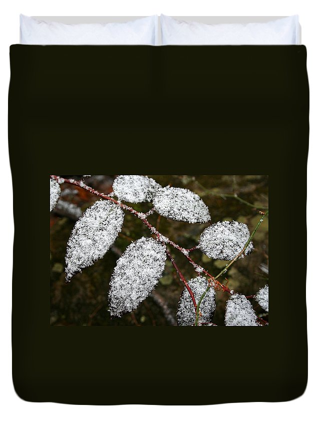 Winter Season Cold Snow Tree Branch Leaf Leaves White Green Frosted Powder Duvet Cover featuring the photograph Powdered by Andrei Shliakhau