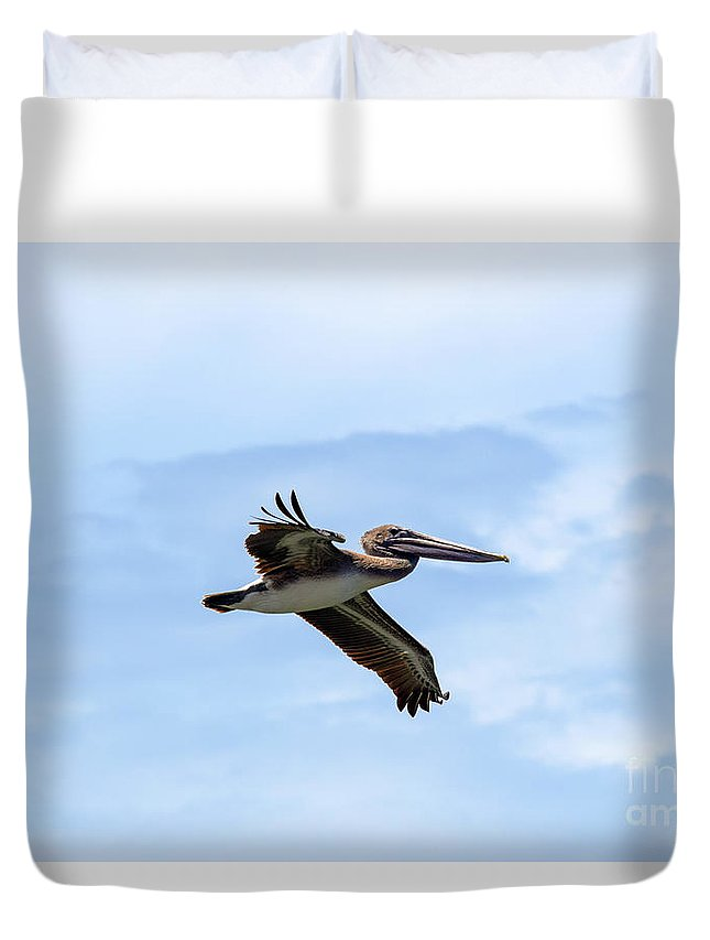Brown Pelican Duvet Cover featuring the photograph Power Glide by William Tasker