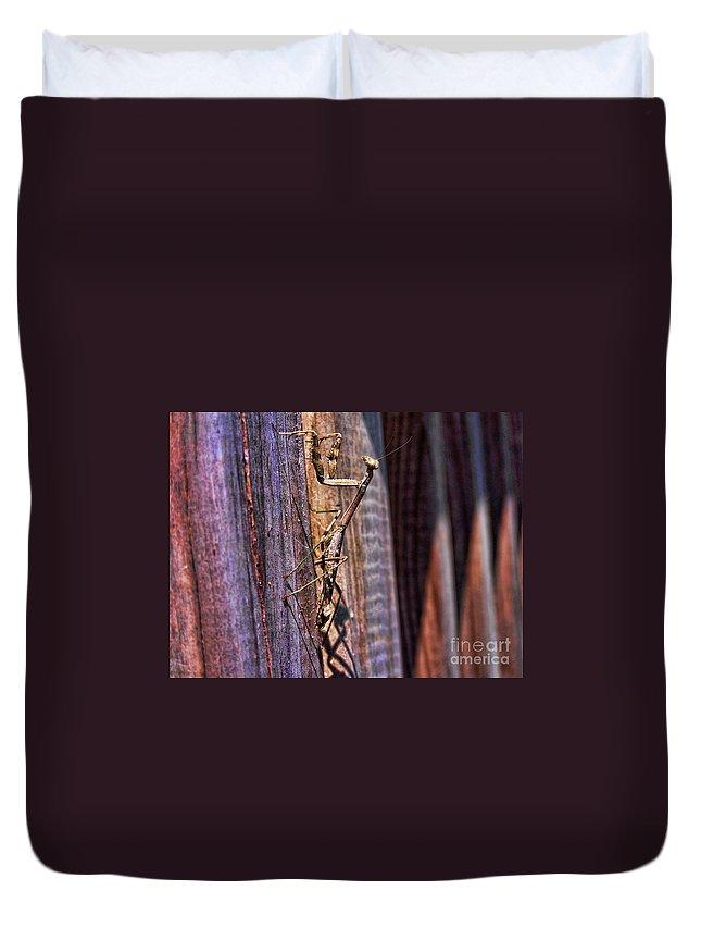 Praying Duvet Cover featuring the photograph Praying Mantis by Alexander Butler