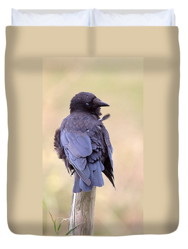 Crow Duvet Cover featuring the photograph Preening Crow by Bob Kemp