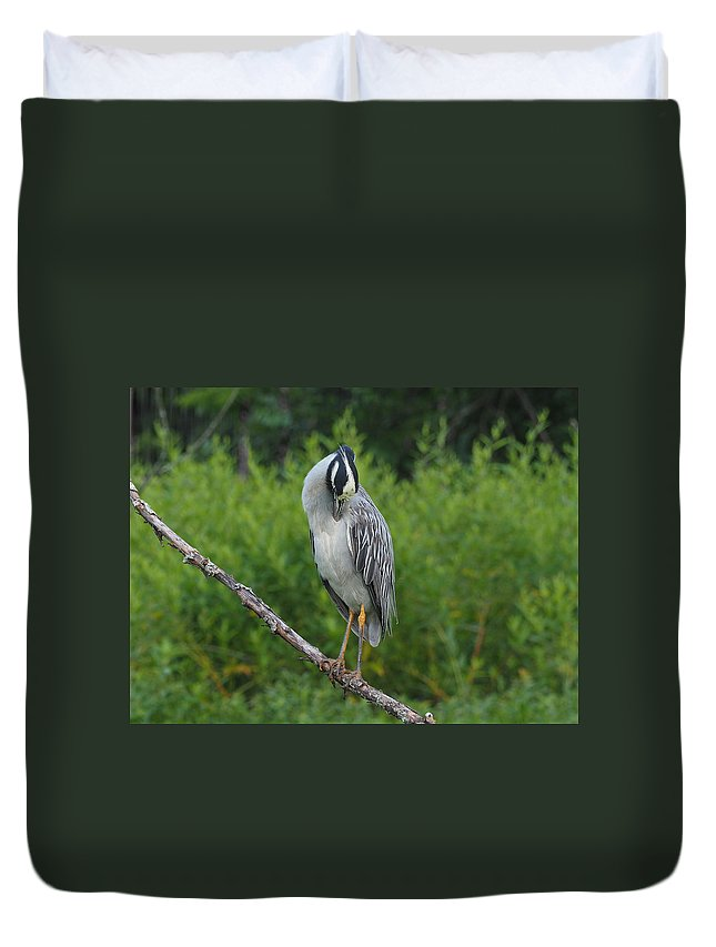 Heron Duvet Cover featuring the photograph Preening by Paula Ponath