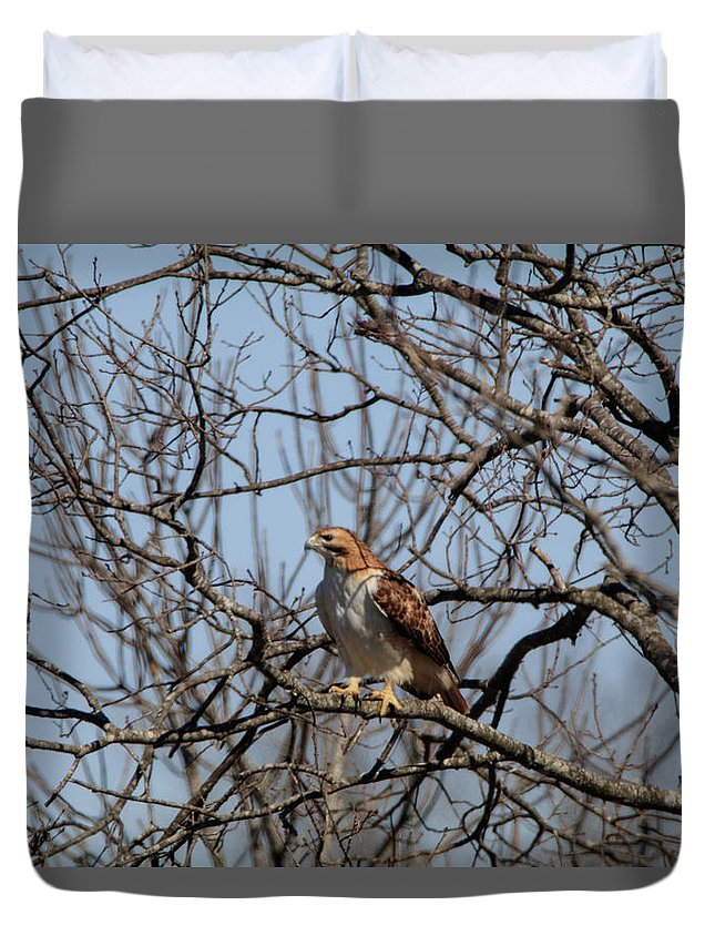 Hawk Duvet Cover featuring the photograph Preparing For Take Off by Tyler Schlitt