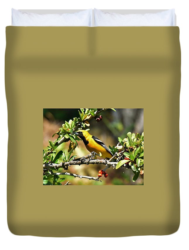 Linda Brody Duvet Cover featuring the photograph Pretty Boy In Bush I by Linda Brody