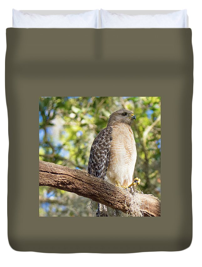 Red Shoulder Hawk Duvet Cover featuring the photograph Pretty In Red by John Ruggeri