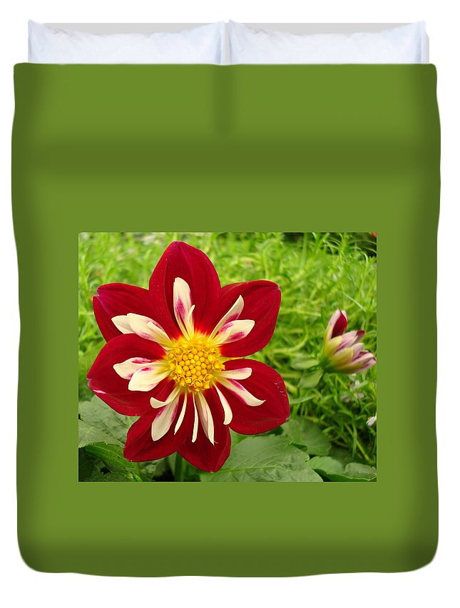 Kathy Bucari Duvet Cover featuring the photograph Pretty In Red by Kathy Bucari