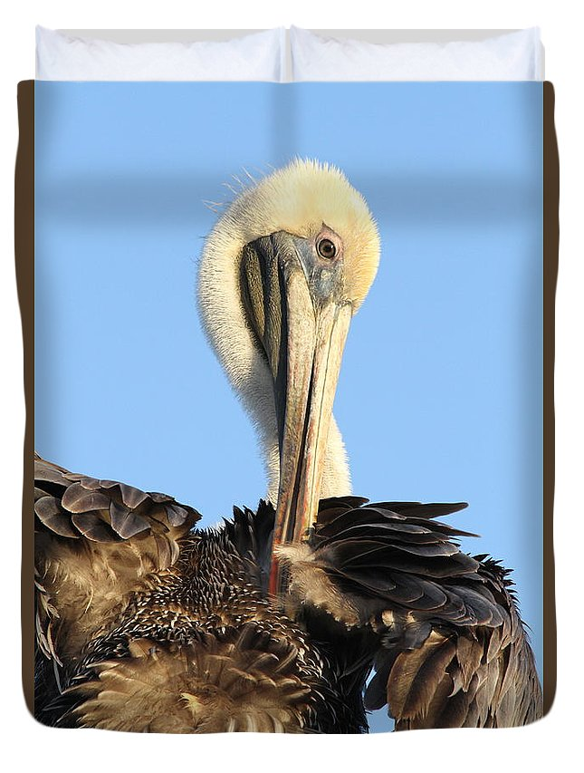 Pelican Duvet Cover featuring the photograph Pretty Pelican by Jim Clark
