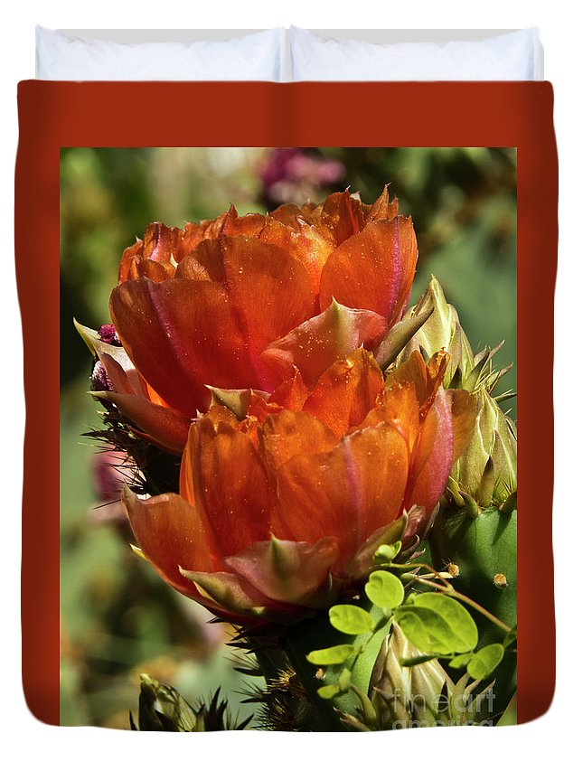 Boyce Thompson Arborretum Duvet Cover featuring the photograph Prickly Pear Blossoms by Kathy McClure