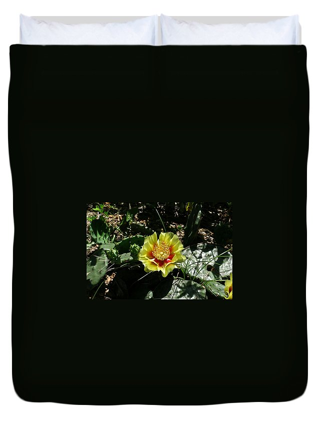 Prickly Duvet Cover featuring the photograph Prickly Pear Flowering by Douglas Barnett