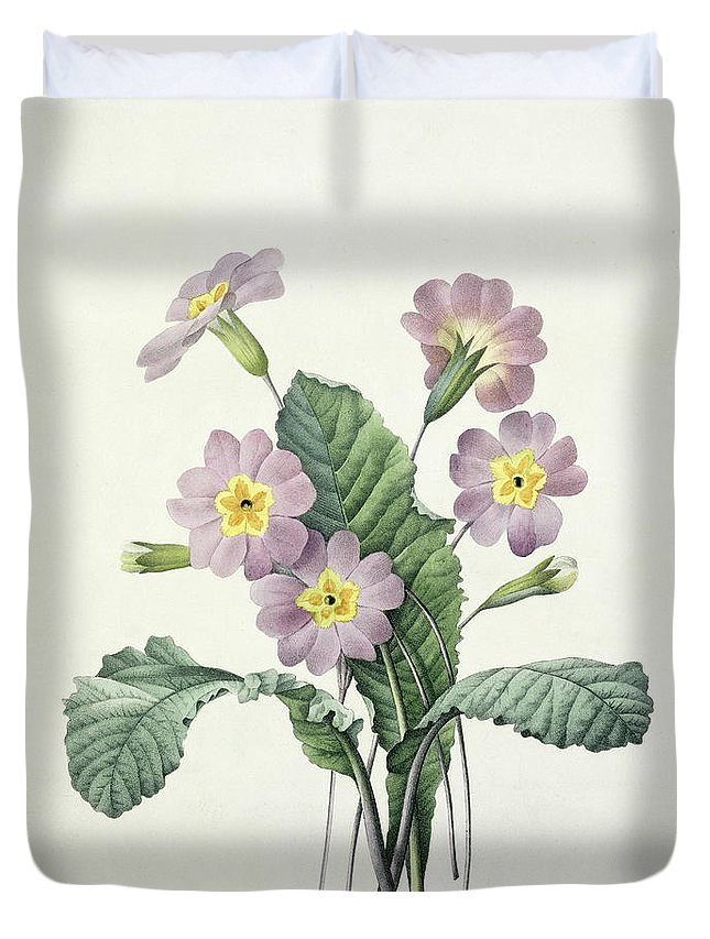 Primula Duvet Cover featuring the drawing Primrose by Pierre Joseph Redoute