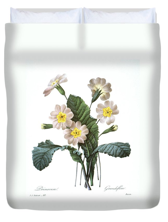 1833 Duvet Cover featuring the photograph Primrose (primula Aucalis) by Granger