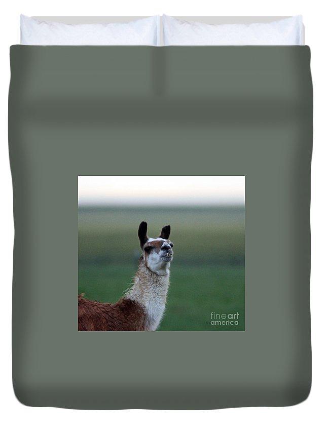 Llama Duvet Cover featuring the photograph Priscilla Closeup #2 by Robert Smitherman