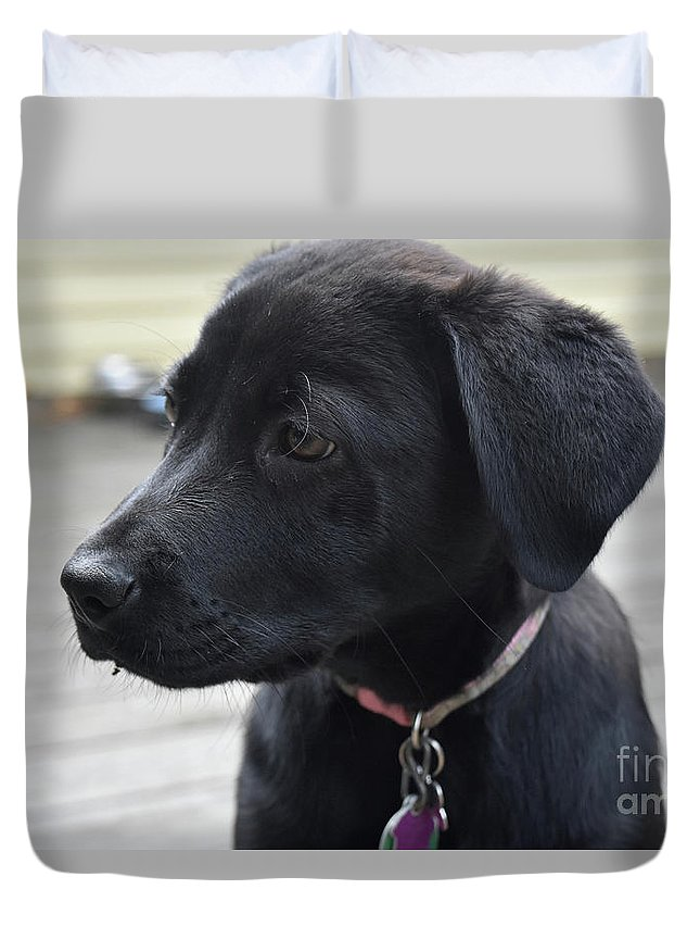 Profile Face Of A Small Black Labrador Retriever Pup Duvet Cover