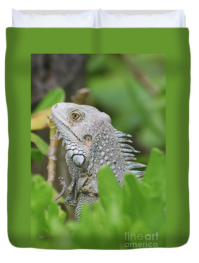 Iguana Duvet Cover featuring the photograph Profile Of A Gray Iguana Perched In A Bush by DejaVu Designs