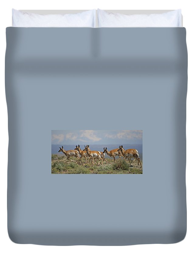 Pronghorn Duvet Cover featuring the photograph Pronghorn Antelope Running by Heather Coen
