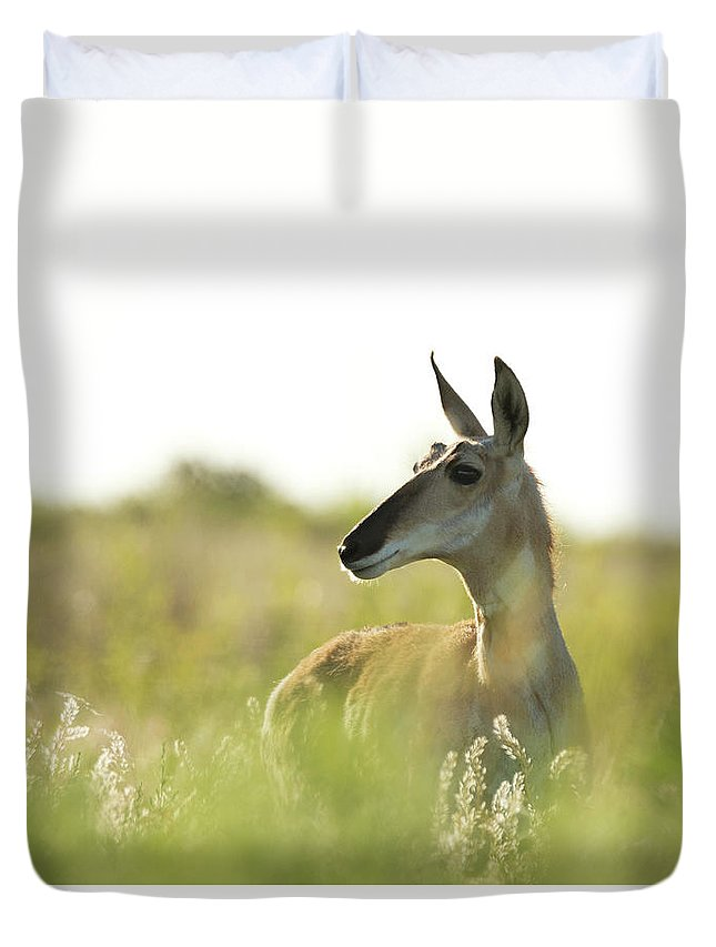 Pronghorn Duvet Cover featuring the photograph Pronghorn by Sherry Adkins