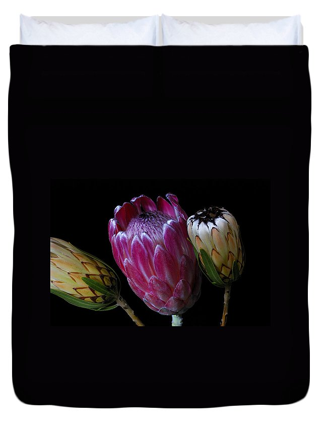 Proteas Duvet Cover featuring the photograph Proteas by Wayne Sherriff