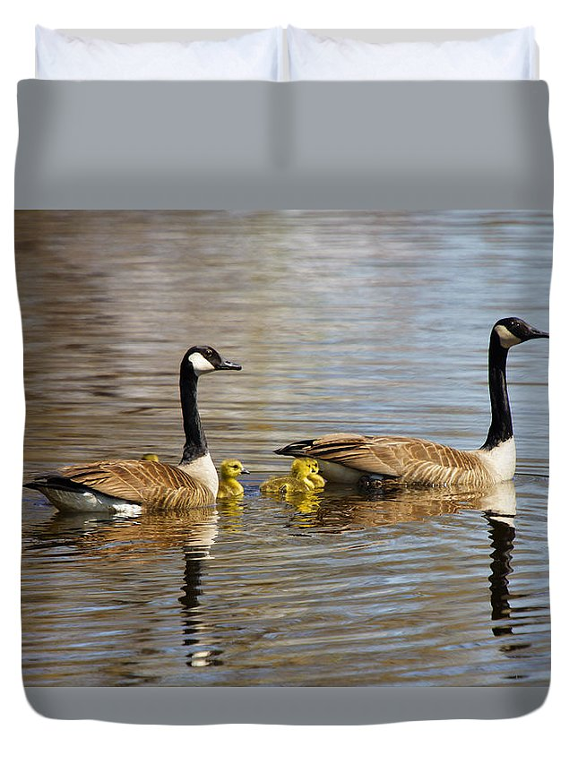 Geese Duvet Cover featuring the photograph Proud Parents by Donald Crosby