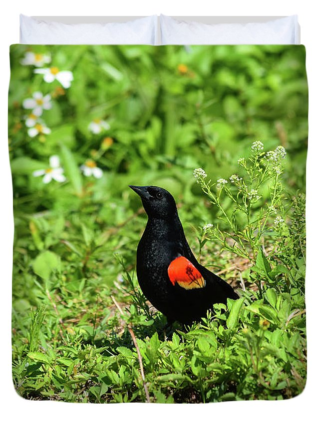 Proud Red-wing Duvet Cover featuring the photograph Proud Red-wing by William Tasker