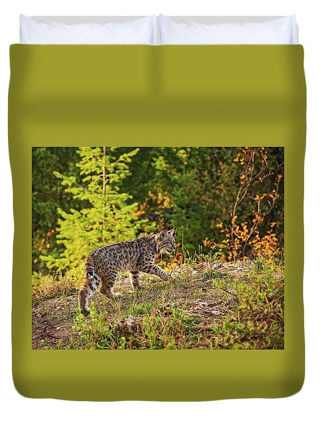 Bobcat Duvet Cover featuring the photograph Prowling bobcat by Roy Nierdieck