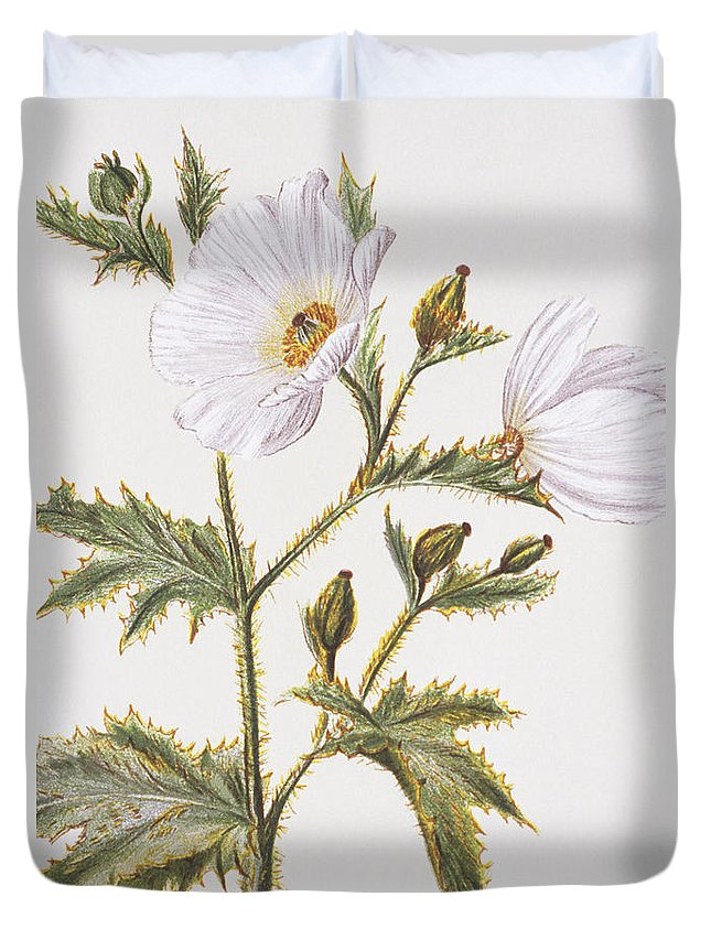 1885 Duvet Cover featuring the painting Pua Kala Flower by Hawaiian Legacy Archive - Printscapes