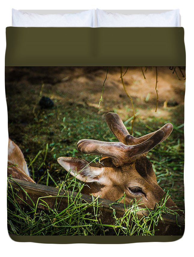 Deer Duvet Cover featuring the photograph Pudu Deer by Constance Puttkemery