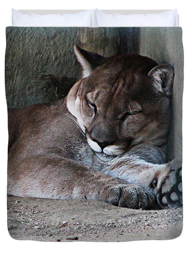 Puma Duvet Cover featuring the photograph Puma by Sandra Groenewald